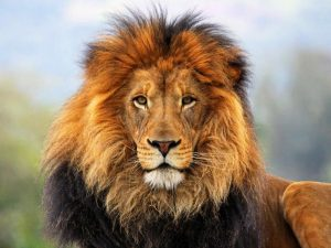 марк_де_турк, лидерски_умения, лидер_отговорност